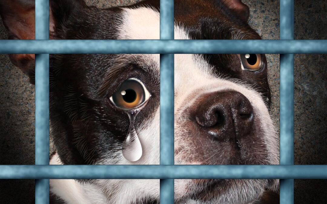 La aplicación para denunciar casos de abandono o maltrato Animal